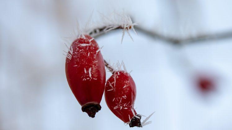 Atelier Se préparer à l'hiver avec les plantes et l'énergétique