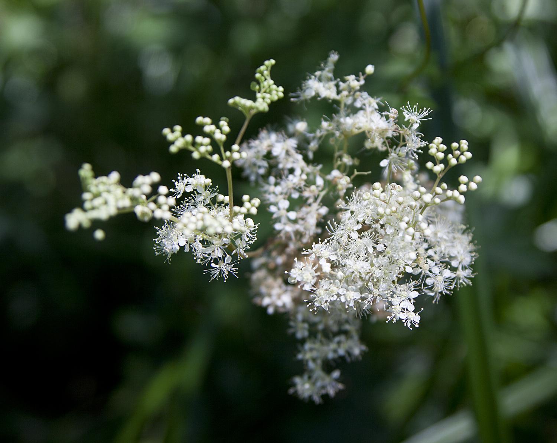 Qu'est-ce que l'éco-herboristerie ? #1