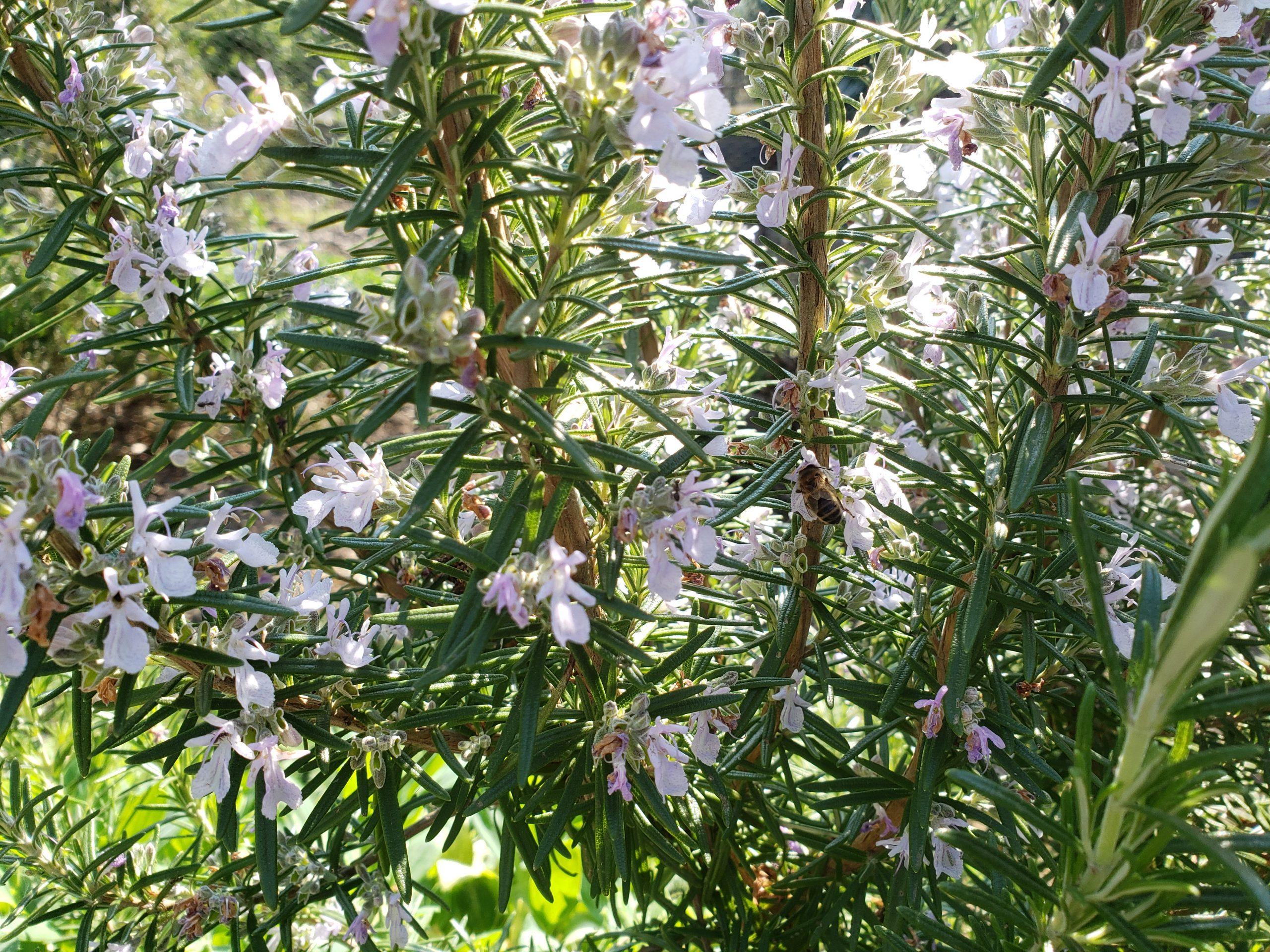 Qu'est ce que l'éco-herboristerie #2