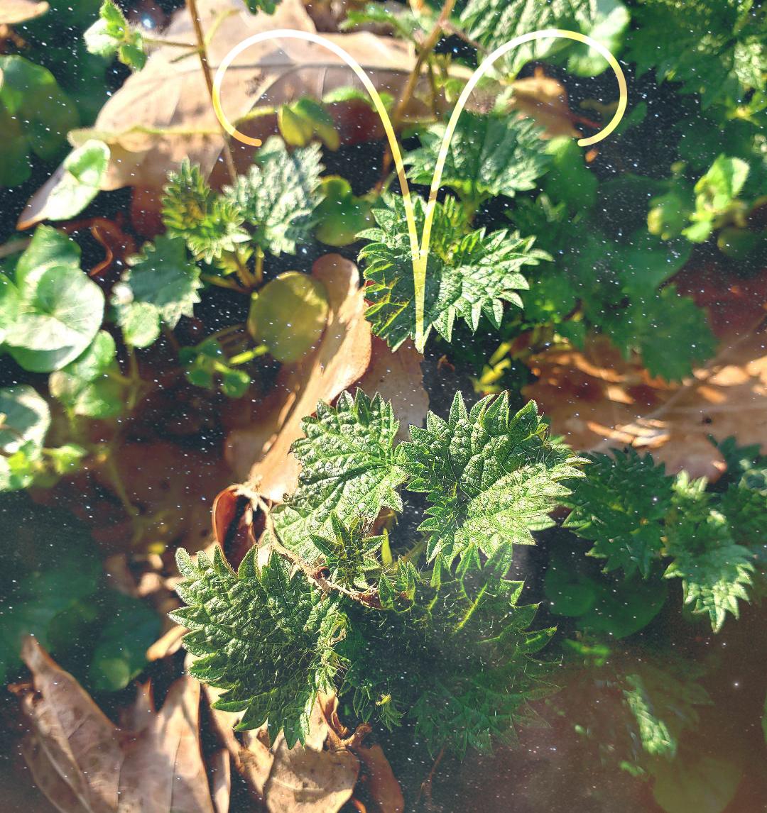Programme Herbal Zodiac, le zodiaque végétal